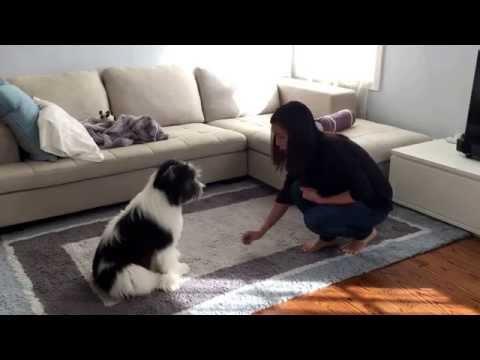 Porter masters Dog Obedience Training 1 (Polish Lowland Sheepdog)