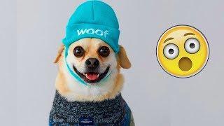 Я РЖАЛ ПОЛ ЧАСА  Приколы с Животными 2019  Смешные Коты и Собаки