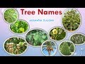 77 Tree Names in English and Tamil