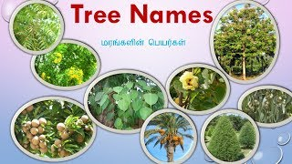 77 Tree Names With Pictures in Tamil and English