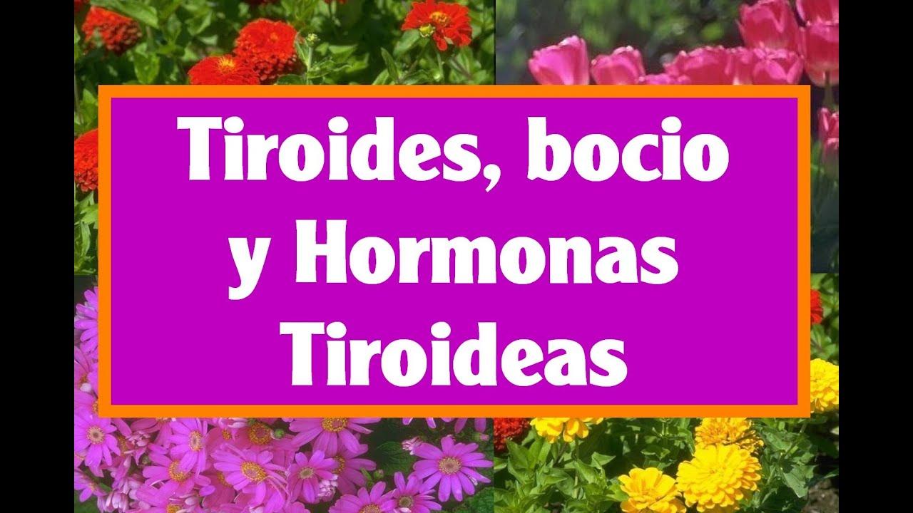 5 remedios naturales para la gl ndula tiroides y bocio - Ambientadores naturales para la casa ...