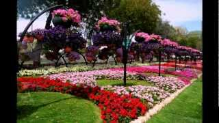 Al Ain Paradise   Парк цветов ОАЭ