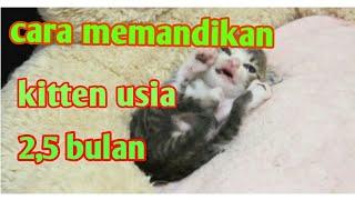 Cara Memandikan Kucing Kitten Persia (4 kittens)