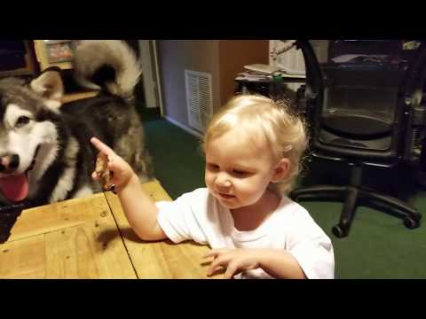 Cute Funny Baby Teasing Her Alaskan Malamute!