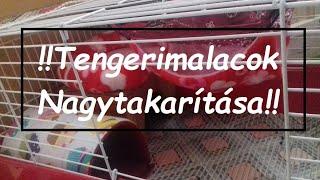 tengerimalacok látása)