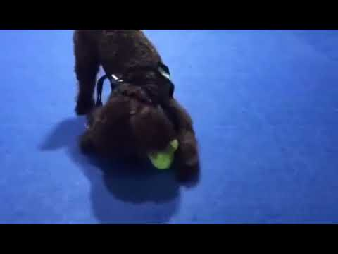 WICKEDBONE: World's First Smart & Interactive Dog Toy by Cheerble