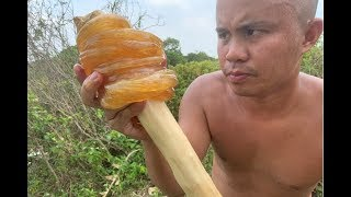 Survival skills make giant candy from sugarcane with primitive presses –DIY Food and lollipops