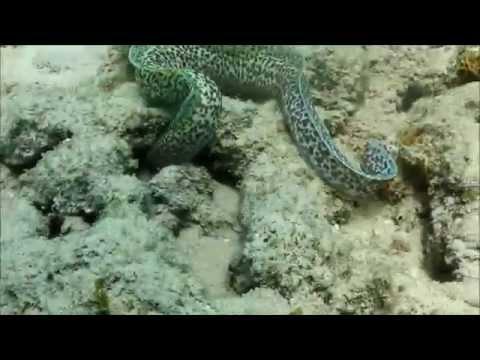 Lower Bavarian Diving in Curacao Westpunt 2015