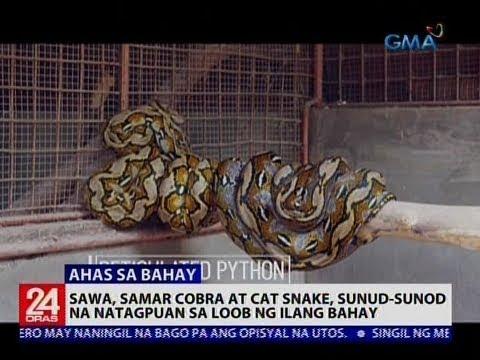 Sawa, Samar cobra at Cat snake, sunud-sunod na natagpuan sa loob ng ilang bahay