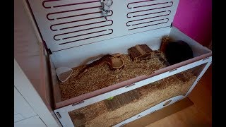 unboxing belles new cage