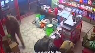 دزدی از مغاره با مثلث خانوادگی در ایران. واقعا شرم آوره