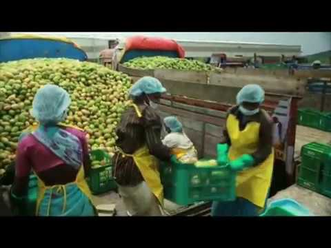 Factory making Mango Juice concentrate