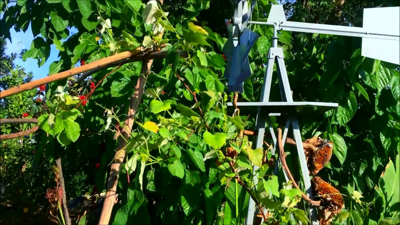 growing grapes in phoenix az red flame monukka tannat and