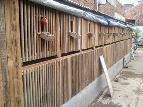 Membuat Kandang Ayam Bangkok Sederhana Dari Bambu - YouTube