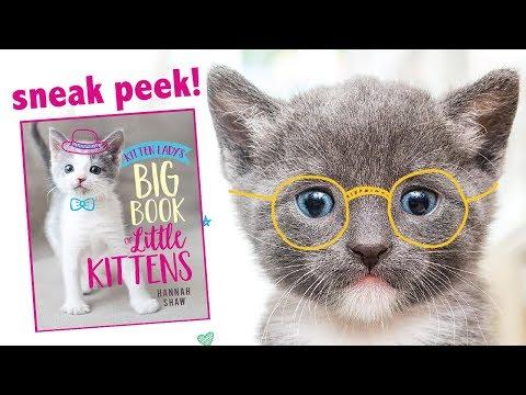 Kitten Lady's Big Book of Little Kittens: SNEAK PEEK!
