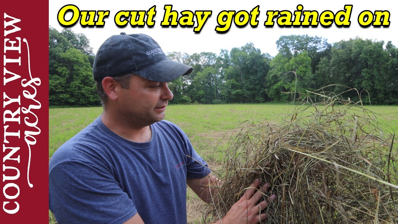 The Weather Changed and the Hay Field Got Rained on, a lot!