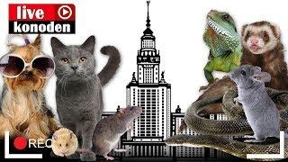 Домашние животные в общаге МГУ