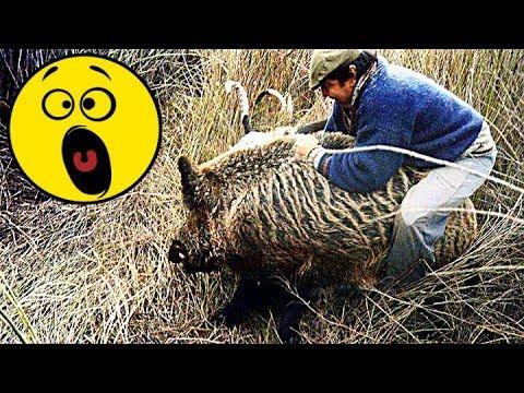 17 видео Охота