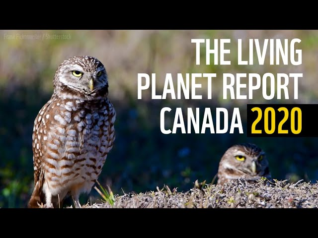 The Living Planet Report Canada 2020
