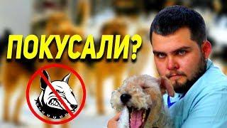 Бездомные собаки нападают. Что делать? Кто в ответе? ОХУ #9