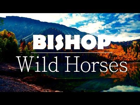 [HD Lyrics] BISHOP  - Wild Horses  [Glouvin Music]