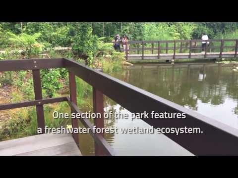 Botanic Gardens' Learning Forest