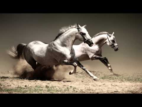 America  A Horse With No Name HD
