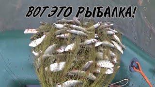 Воруем рыбу на частных каналах Рыбалка Кастинговой сетью с лодки