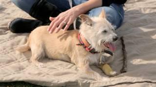 Shelter Dog Walter Gets Best Day Ever!