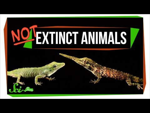 7 Animals We Used to Think Were Extinct (But Arent!)