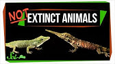 7 Animals We Used to Think Were Extinct (But Aren&#39t!)