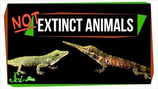 Download 7 Animals We Used to Think Were Extinct (But Aren't!) Mp3 and Videos