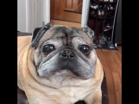 Ebony anal doggystyle