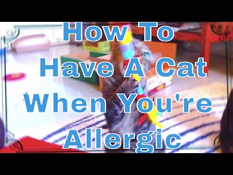 How To Have A Cat When You're Allergic