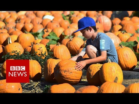 Halloween: How did we fall in love with pumpkins? - BBC News