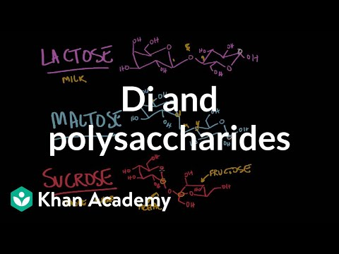 Carbohydrates- di and polysaccharides | Chemical processes |