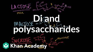 Carbohydrates- di and polysaccharides | Chemical processes | MCAT | Khan Academy