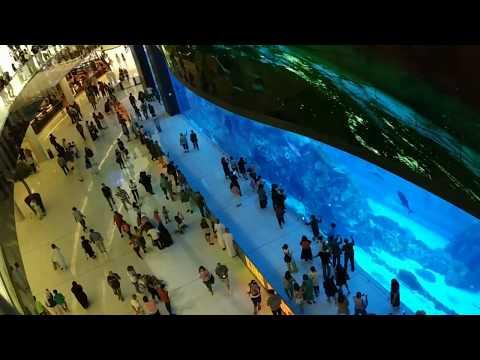 समंदर के नीचे शोपिंग मौल, Dubai mall Aquarium sharks underwater zoo,dubai shopping mall,sharks zoo