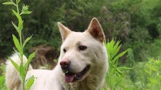 鸟语花香,空气清新,带三只狗狗惬意游山.
