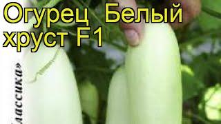 Огурец Белый хруст F1 (Огурец). Краткий обзор, описание характеристик, где купить, семена
