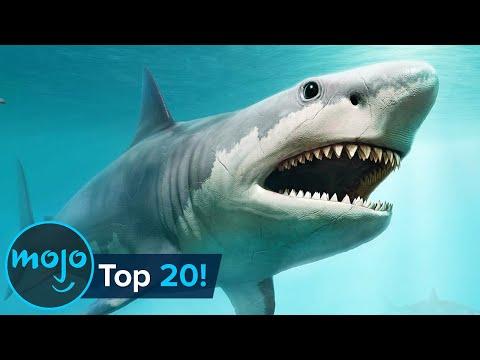 Top 20 Extinct