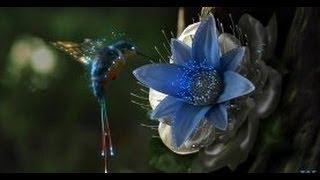 Дикая природа. Экватор. Южная Америка. Интересный документальный фильм.