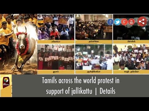Tamils across the world protest in support of jallikattu | Details