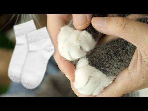 휴지 양말 특집) 야옹이의 흰 양말을 자세히 들여다 봐요