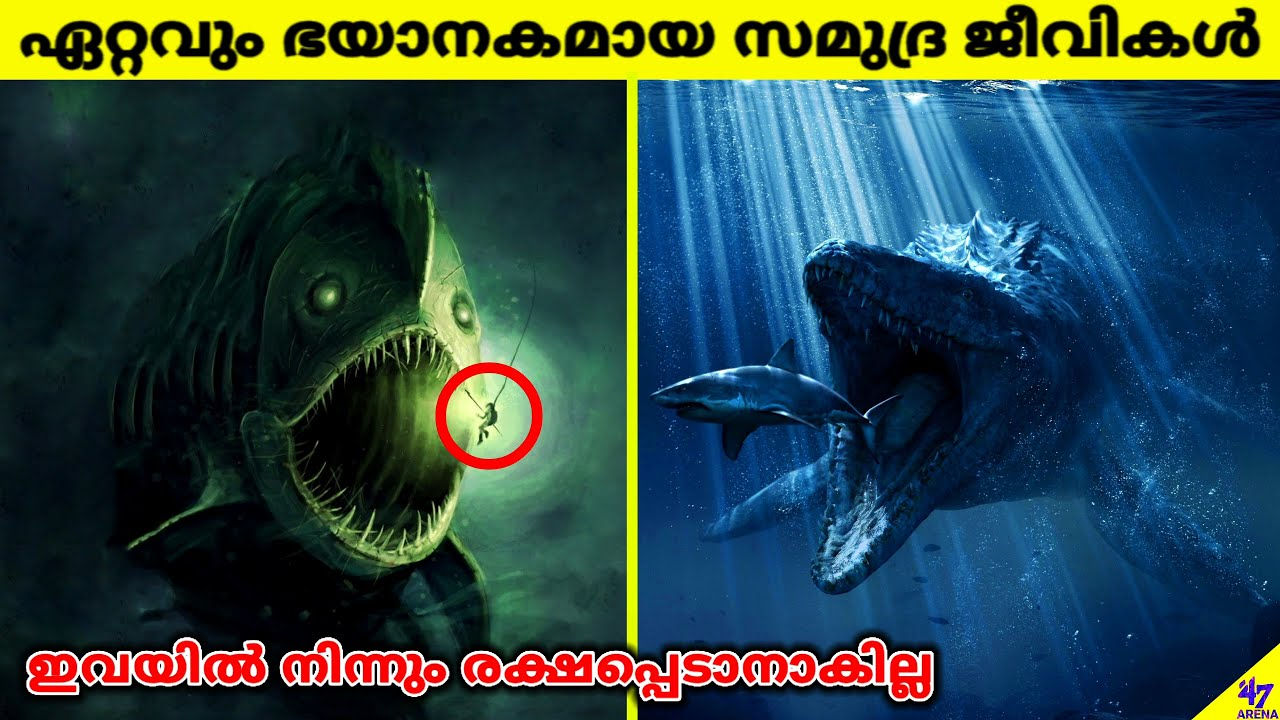 Most Dangerous Ocean Creatures In The World   Facts Malayalam   47 ARENA