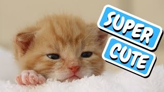 Cute Pets doing Funny things Compilation 2019 | Cute Pets