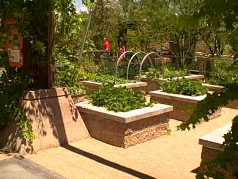 Las Vegas Summer Vegetable Garden - How to Grow Food in Extreme Conditions