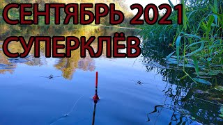 Первая рыбалка в сентябре 2021 отличный клёв на новых местах