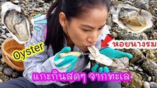 Shucking oysters on the beach ,WA 2020/ Eng sub