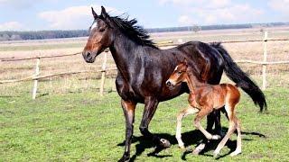 cheval Pays de la Loire France - 01bots #animaux